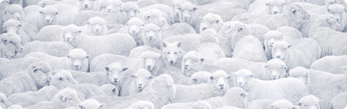 https://hexvix.com/sites/www.hexvix.com/files/revslider/image/sheep-normal_0.png